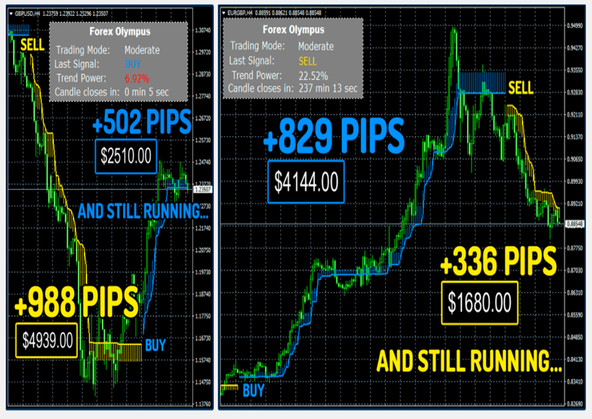 Forex Olympus Trading Results